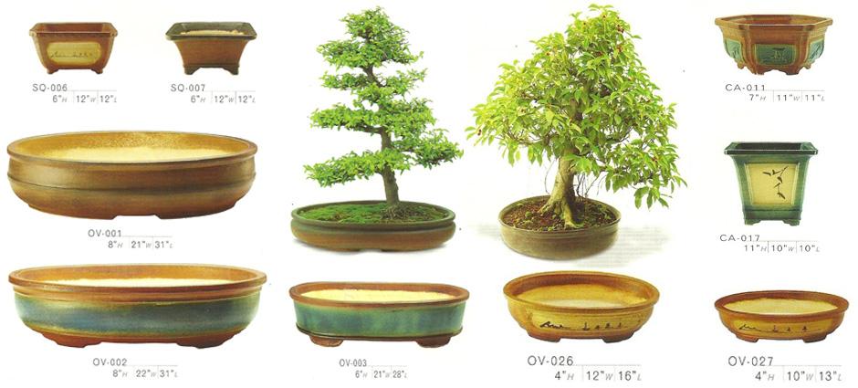 Grow Green Bonsai